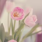 Spring Tulips by Kristybee