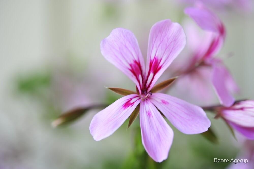 Flowers by julie08