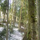 Forest Sun Rays in the Snow #54 by Dawna Morton