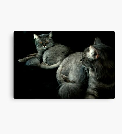 Tabby Cat Reflections Canvas Print