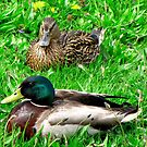 Things are just Ducky here ! by Nancy Richard