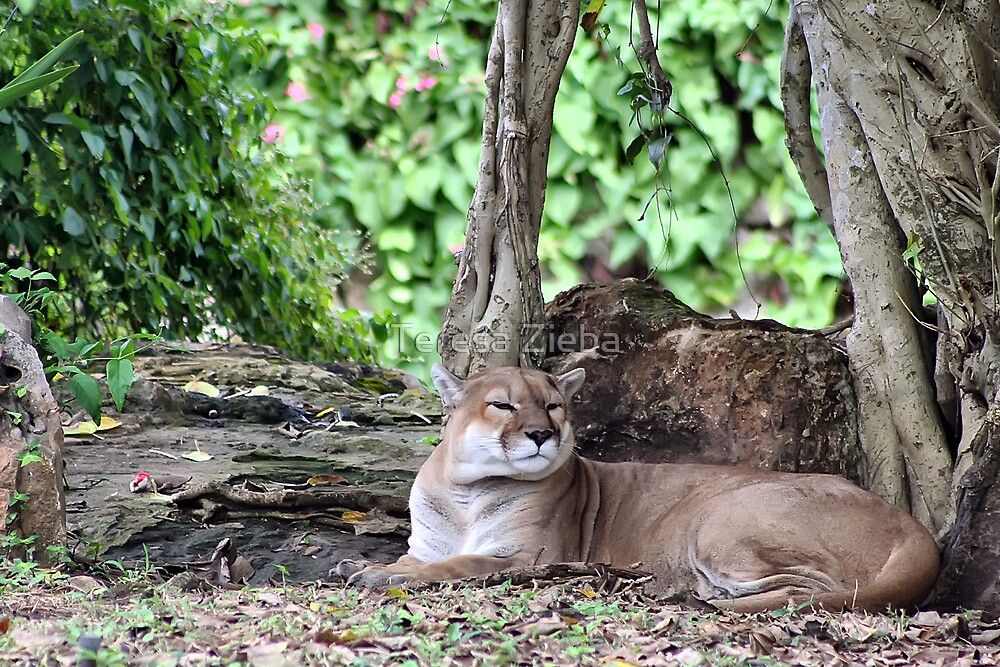 Big Cat Resting by Teresa Zieba