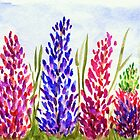 Watercolor Floral Art, Lupine Wildflowers by ItayaArt
