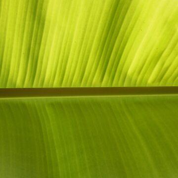 Banana Leaf  by KristenJoy