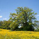 Spring Meadow, Lake Staffel by Kasia-D
