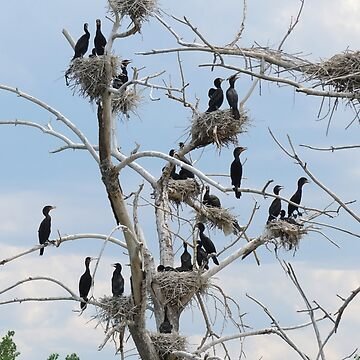 Annual Cormorant Conference by livehonestly