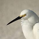 White Egret Profile by Virginia N. Fred