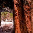 Signs of the Tunnel tree by Mark Ramstead