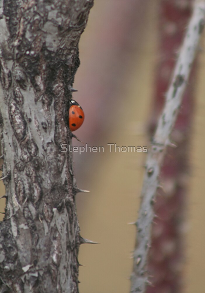 The Way to the Top isn't Easy by Stephen Thomas