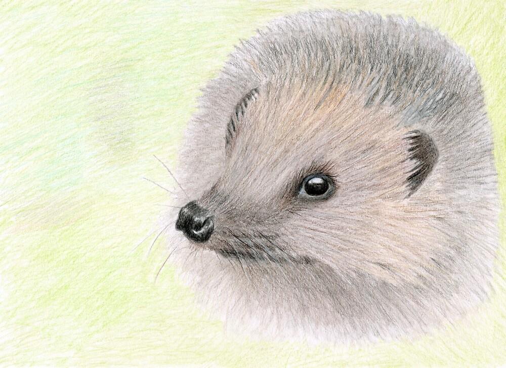 Young Hedgehog by Linda Ursin