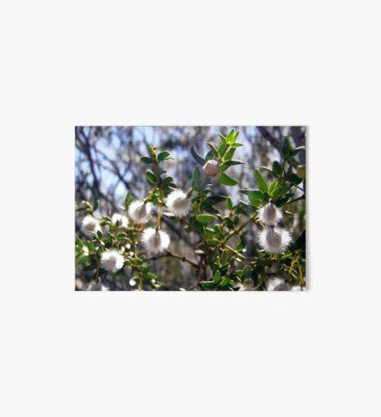 Creosote bush seeds Art Board