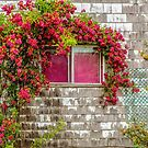 Wild roses  by Manon Boily