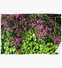 Purple Flowers on Green Bush Poster