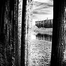 Under the Pier by TheNatureOfThings