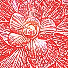 Begonia V by Ruth Durose