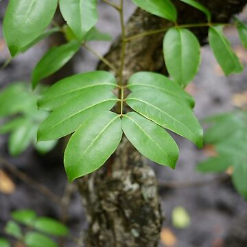 Branch by lachalexander