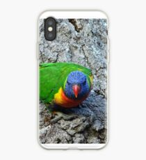 Regenbogen Lorikeet iPhone-Hülle & Cover