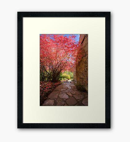 Pathway at Lavandula Framed Print