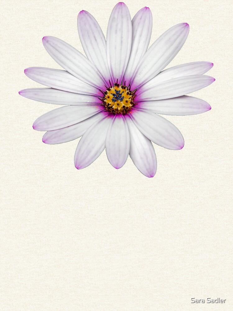 African Daisy by sadler2121