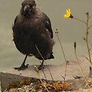 Crow and Flower by qshaq