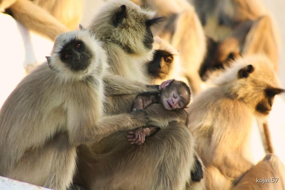 Look At My Baby, Pushkar, Rajasthan, India by kojak67