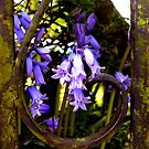 rustic bluebells .... by SNAPPYDAVE