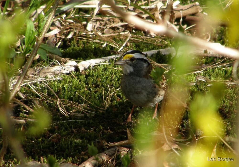 Hiding Sparrow by Len Bomba