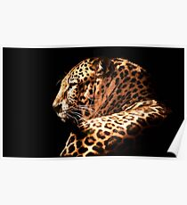 wildlife nature leopard animal Poster