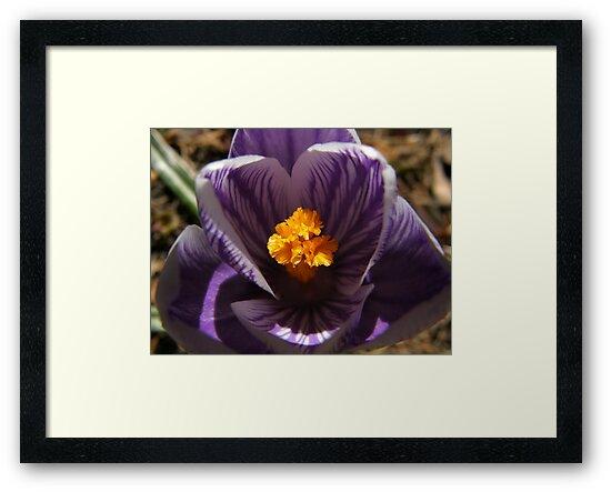 Saffron Glow by Len Bomba