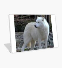 Arctic Wolf on the alert. Laptop Skin