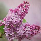 Lilac Florettes by TheresaC1953