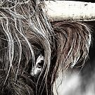 Highland Cow. Eye See You. Isle of Skye. Scotland. by PhotosEcosse
