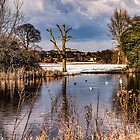 Foots cray Meadows in the snow by Joe Gillbanks
