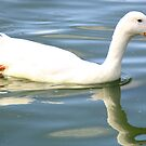 Little White Duck by Martina Fagan
