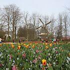 Tulips and Windmill at Keukenhof by Elena Skvortsova