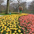 Flower display at the Keukenhof garden by Elena Skvortsova