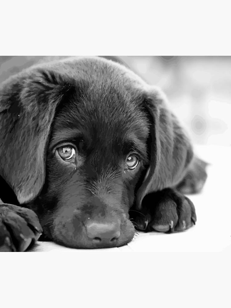 Black Lab Puppy Chocolate Lab Puppy Black White Puppy Duvet Cover