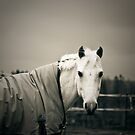 A Horse  by trbrg