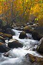 Bishop Creek Fall Colors by photosbyflood