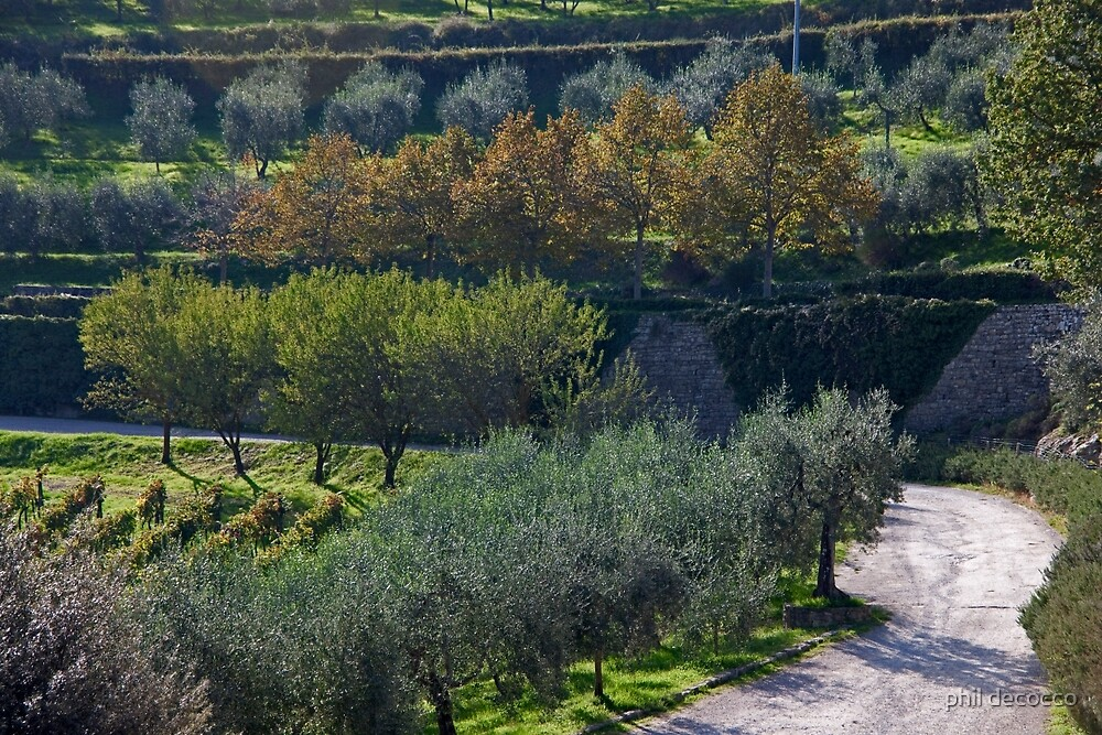 Olive Orchard Road by phil decocco