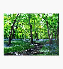 In bluebell heaven Photographic Print