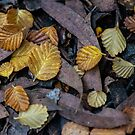 Forest floor Fagus by fiona-gumboots