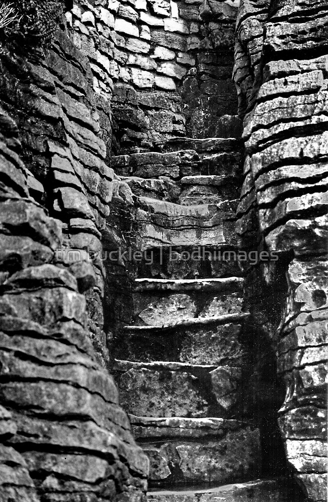 stone steps. punakaiki, aotearoa by tim buckley   bodhiimages