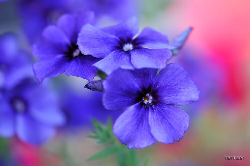 My Blue Heaven by harmser