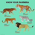 Know Your Panthera by PepomintNarwhal
