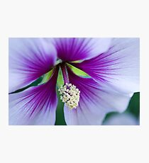 Purple Effusion Photographic Print