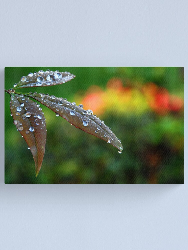 Alternate view of After the Storm Canvas Print