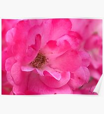 """Pink's Romance"", Photo Artwork Poster"