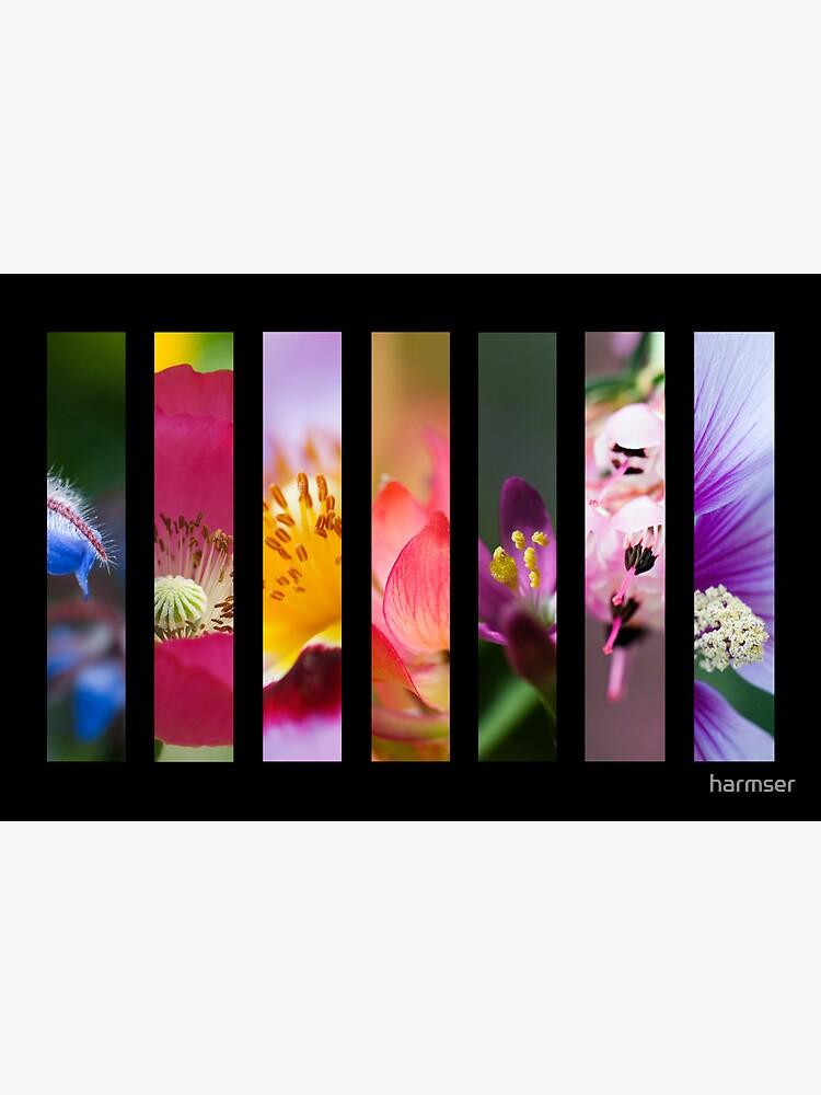 Perennial Bounty by harmser