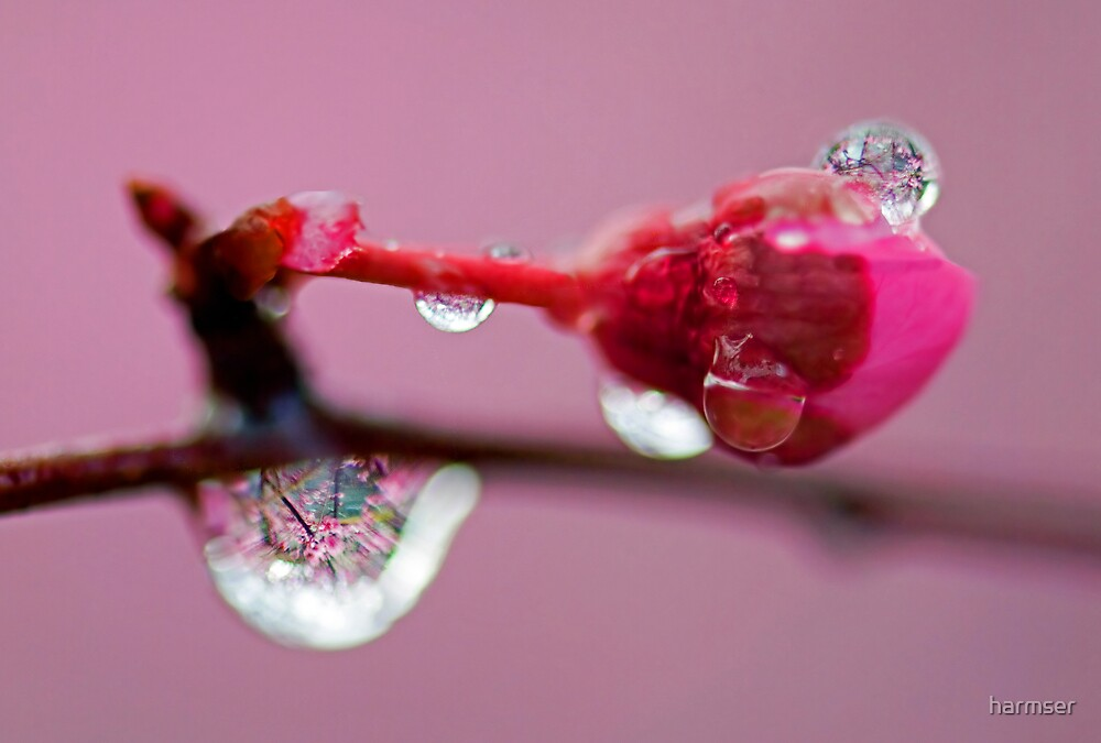 Spring Jewels by harmser